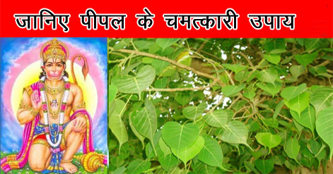 pipal-ke-chamatkari-upay